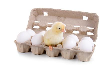 яйца ребенку